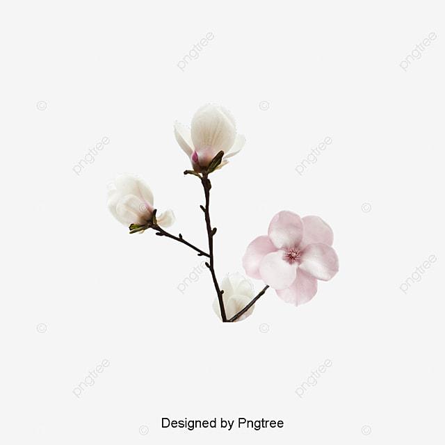 Patron De Flor Blanca De Decoracion Ramas Planta Magnolia Archivo ...