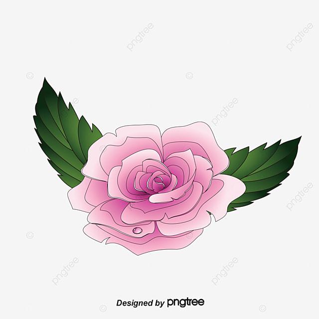 Vector Pintado A Mano Flores Hermosas Flores Diagrama Vectorial