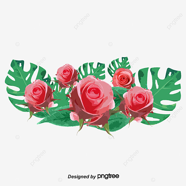 Hand painted watercolor rose flower vine, Invitations, Thanksgiving, March 8 Women's Day PNG