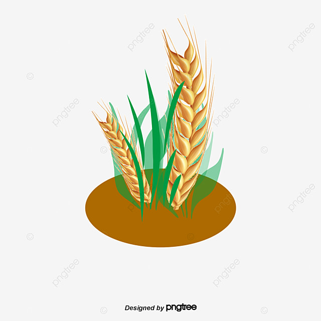 Rice Plant Logo Vector Related Keywords & Suggestions ...