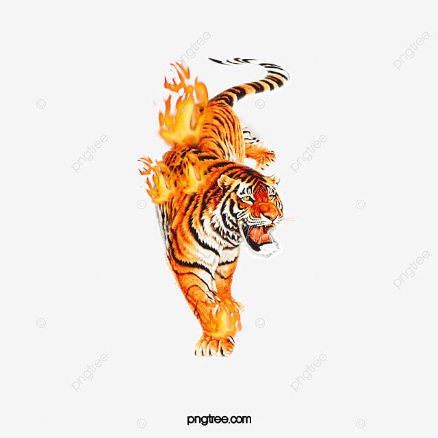 les tigres de charbon de la flamme charbon de bois festival chaleureusement fichier png et psd