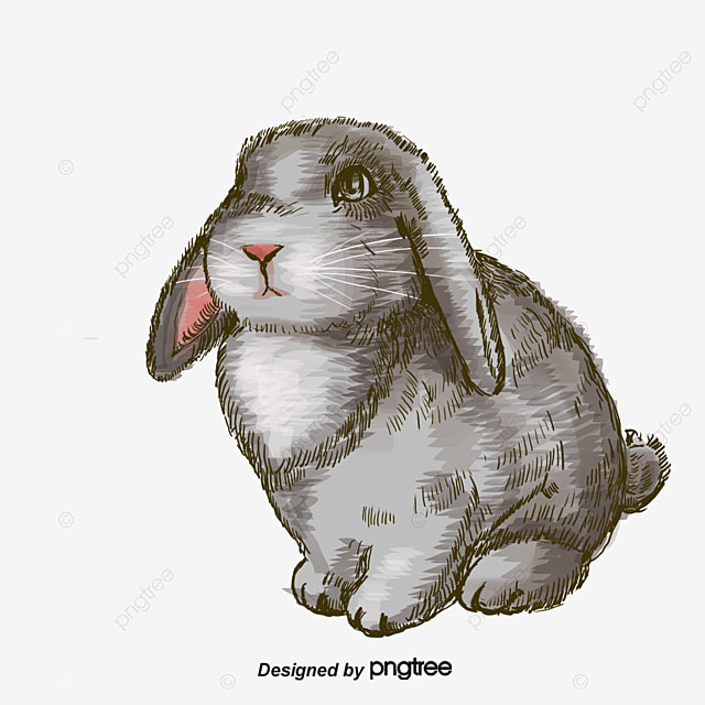 Cartoon Rabbit, Rabbit Clipart, Cartoon Clipart, Hand