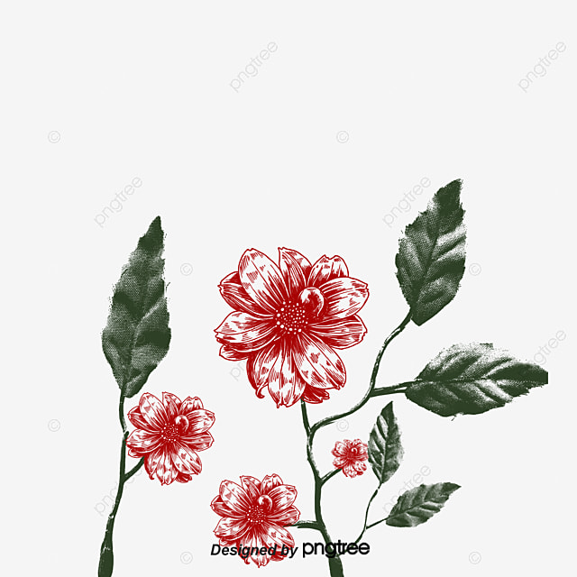 Hand Drawn Rose Rose Gules Love PNG and Vector for Free Download
