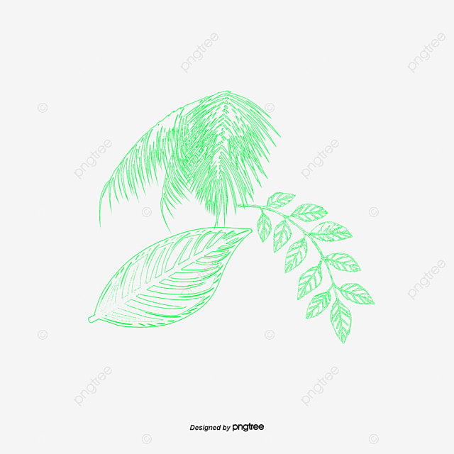 Green Flower Line Drawing : Green lines flower plant vector