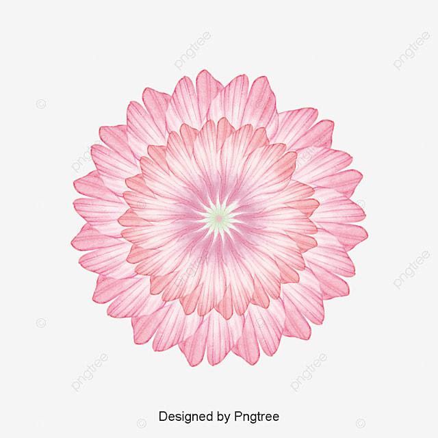 hawaii flor hawaii tropic flor png y vector para