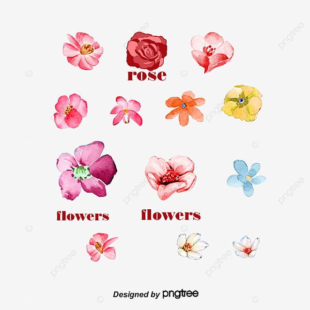 Desenhos De Flores Cor De Rosa Wave Vector Rose Flores Rosa Png E