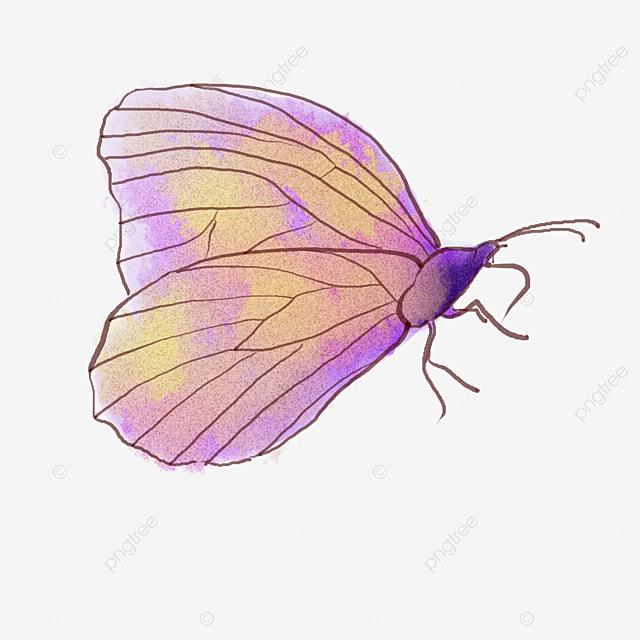 Dessin color papillon dessin color le papillon image png - Dessin colore ...