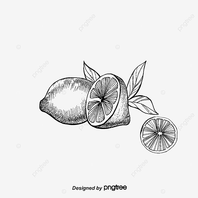 Citrus and lemon black and white line drawing, Citrus ...