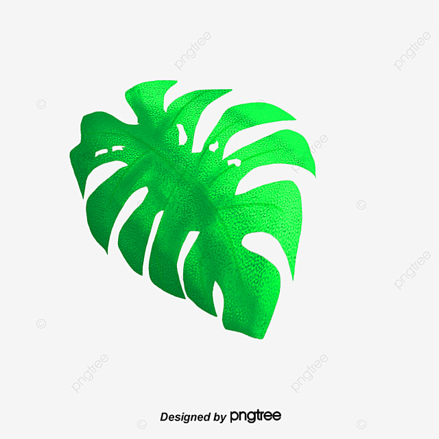 Green Summer Banana Leaves Vector Png Leaf PNG And