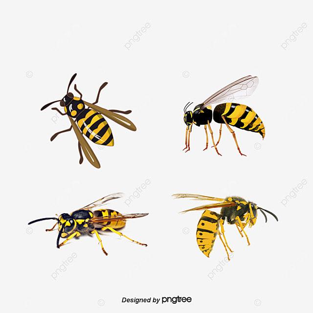Angry Bee, Bee Clipart, Bee Venom, Honeybee PNG And Vector