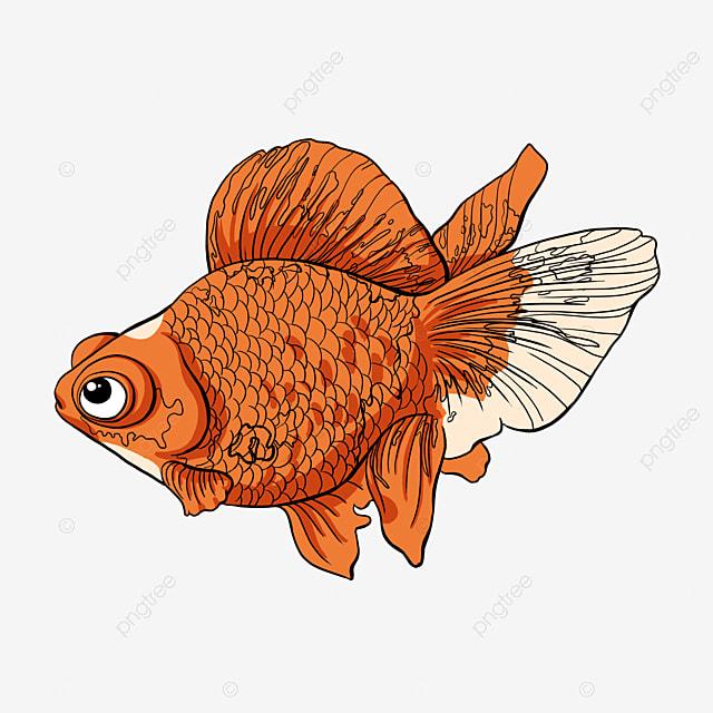 Maintien de la petite sir ne de poisson sir ne poisson poissons image png pour le t l chargement - Image petite sirene ...