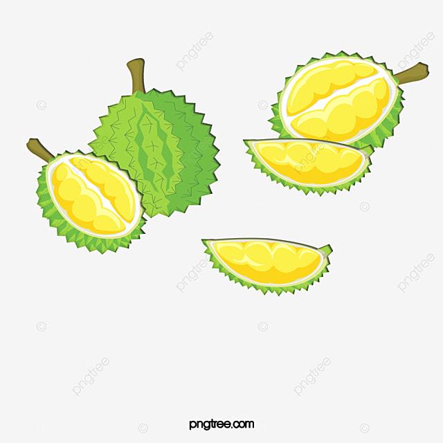 cartoon fresh durian  durian fruit  cartoon  vector fruit clipart fruit clip art for coloring