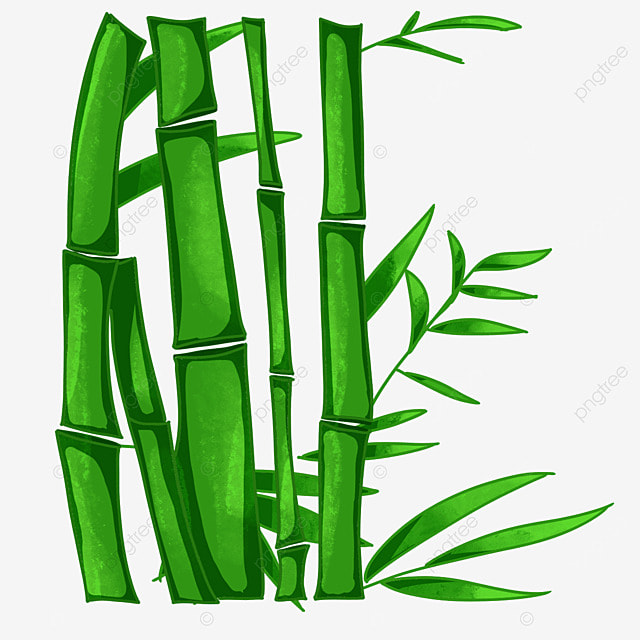 Bamboo bamboo bamboo bamboo leaves bamboo vector png for Bamboe plant