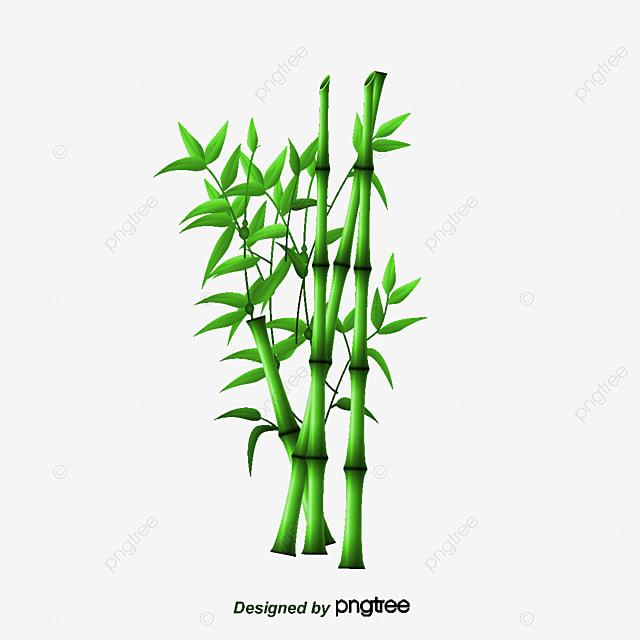 bambou bambou dessin les feuilles de bambou fichier png et psd pour le t l chargement libre. Black Bedroom Furniture Sets. Home Design Ideas