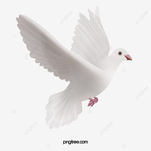 Pombo Pombo OS Pombos Pomba Branca Dove PNG Imagem Para