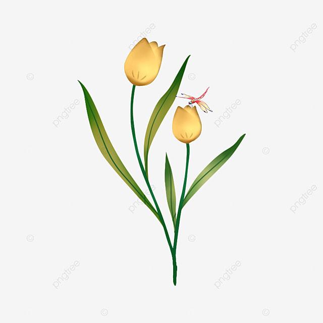 Dessin De La Tulipe, Dessin, Peint à La Main, Tulipe PNG ...