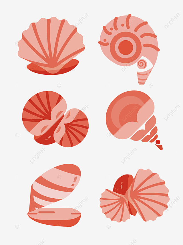 Shell Conch Vector, Vector Download, Web Page Vector PNG Transparent