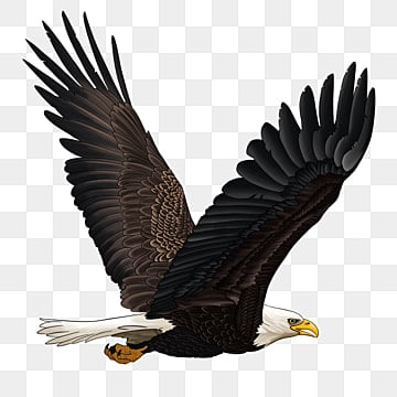 eagle wings png vector psd and clipart with transparent background for free download pngtree eagle wings png vector psd and