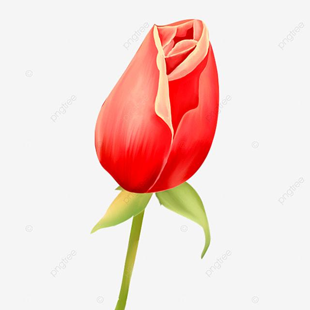 Rosebud Clip Art
