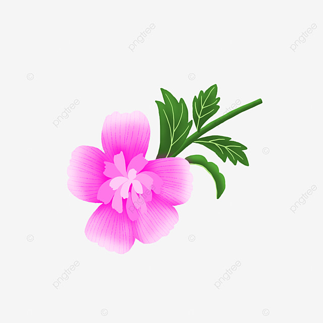 Hand Painted Pink Purple Hibiscus Decorative Material Pink Flowers
