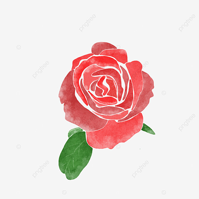 small rose flower hd photos download