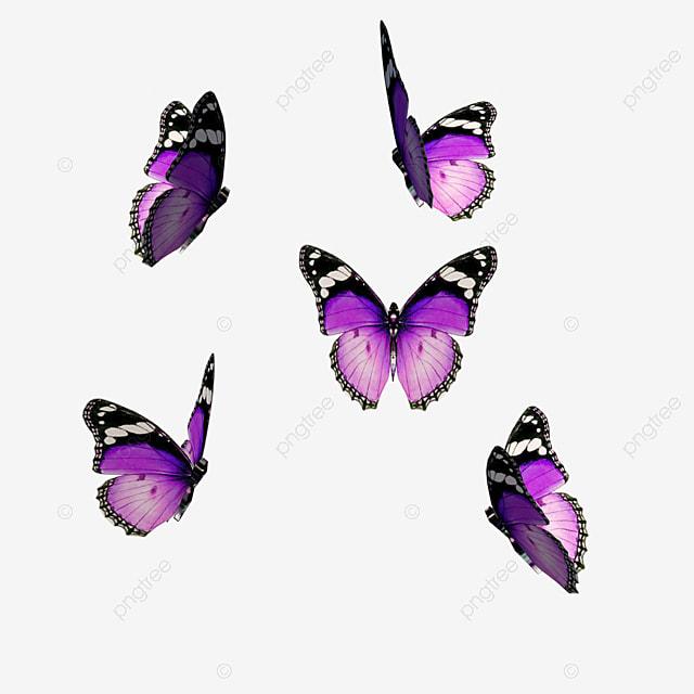 مجموعة من الفراشات الأرجواني تطير الحشرات فراشة حشرة Png وملف Psd للتحميل مجانا