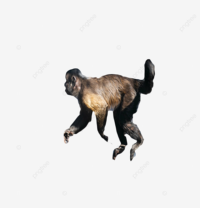 A Living Monkey, Monkey, Live Wave, Lively Jump PNG