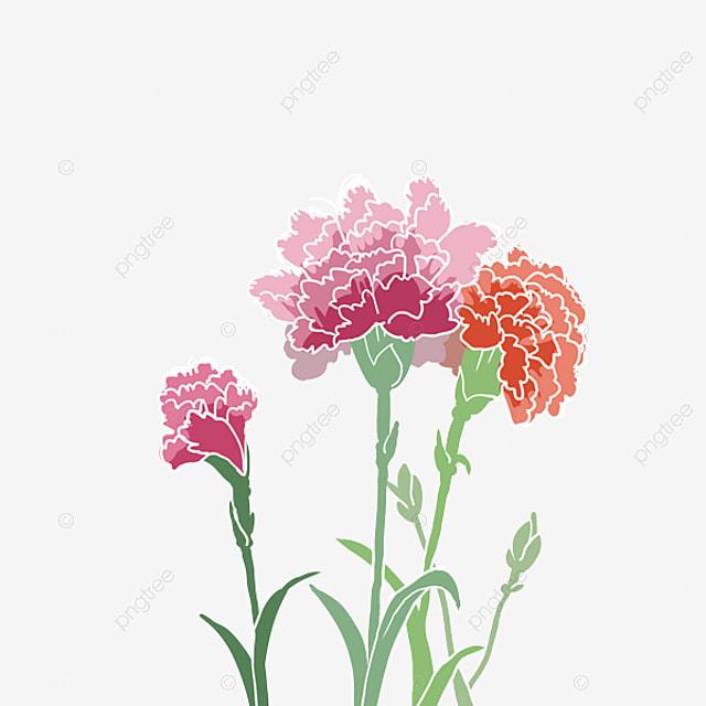 Clavel Del Día De La Madre Clavel Pintado A Mano Planta De Dibujos