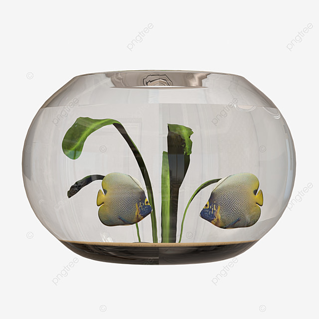 Home Decoration Round Fish Tank Home Decoration Round Fish Tank Fish Tank Png Transparent Clipart Image And Psd File For Free Download