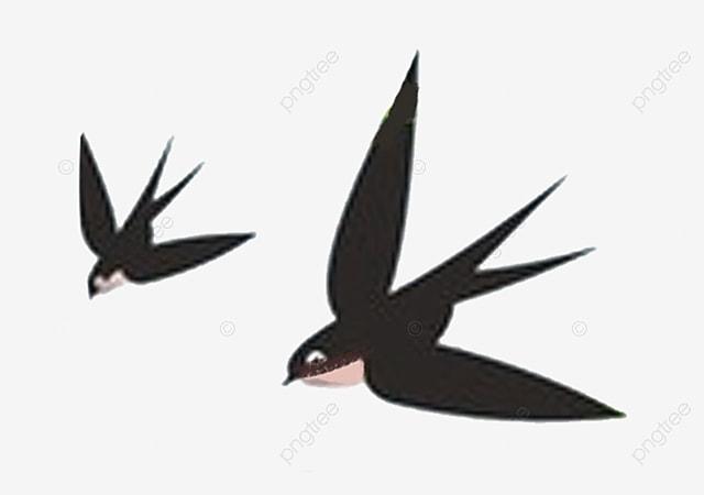 أسود طيور يبتلع اثنين أسود الطيور يبتلع Png وملف Psd للتحميل مجانا