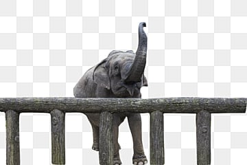Elephant Png Images Download 2900 Elephant Png Resources With Transparent Background Search for elephant printing pictures, lovepik.com offers 5235 all free stock images, which updates 100 free pictures daily to make your work professional and easy. https pngtree com freepng an embarrassing elephant 4414987 html