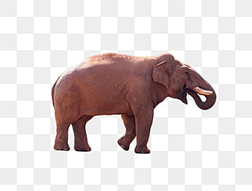 Elephant Png Images Download 2900 Elephant Png Resources With Transparent Background ✅free for personal use only ❌commercial usage: https pngtree com freepng beautiful elephant 4423242 html