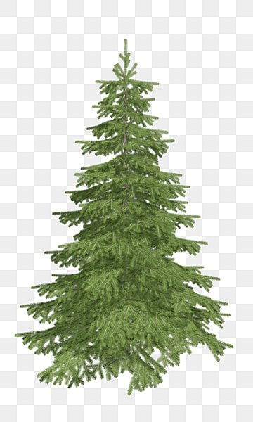 Christmas Tree Transparent Background.Pine Tree Png Images Download 815 Pine Tree Png Resources