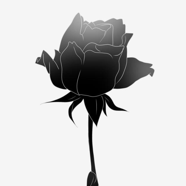 Buket Mawar Hitam Sekuntum Bunga Mawar Hitam Karangan Bunga Png Transparan Gambar Clipart Dan File Psd Untuk Unduh Gratis