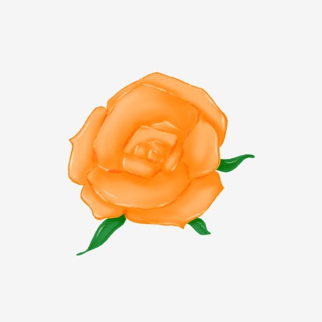 Gambar Mawar Oren Mawar Bunga Mawar Bunga Oren Mawar Emas Bunga Tumbuhan Yang Cantik Png Dan Psd Untuk Muat Turun Percuma