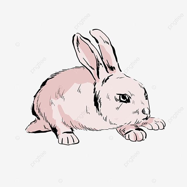 Kelinci Kartun Binatang Lucu Kartun Kelinci Kartun Kelinci Gambar Imut Png Transparan Gambar Clipart Dan File Psd Untuk Unduh Gratis