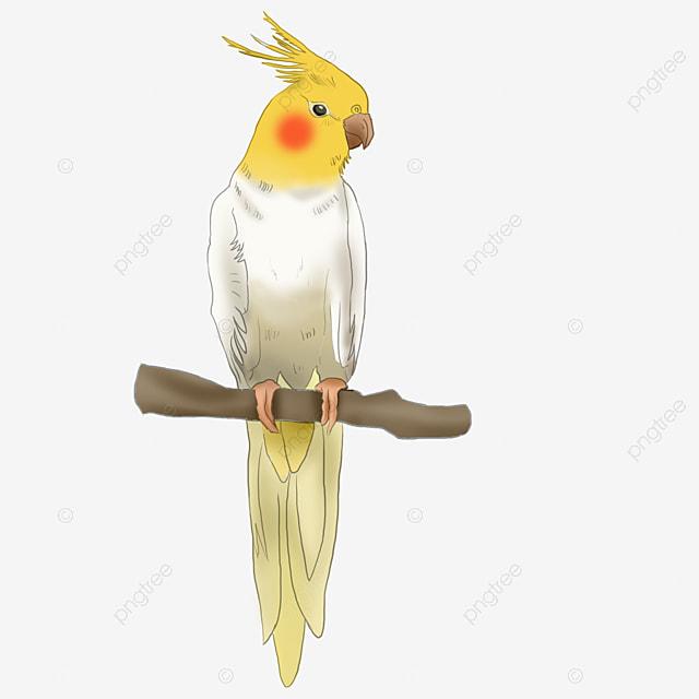 Realistic Bird Standing On The Branch With Yellow Bird Cartoon