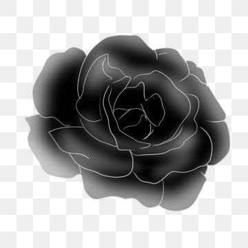 Rosa nera immagini png vettori e file psd scarica gratis su