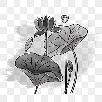 Black And White Lotus Png Images Vector And Psd Files