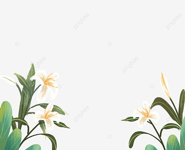 Bunga Bakung Yang Indah Bunga Bakung Cantik Bagus Dilihat Png Transparan Gambar Clipart Dan File Psd Untuk Unduh Gratis