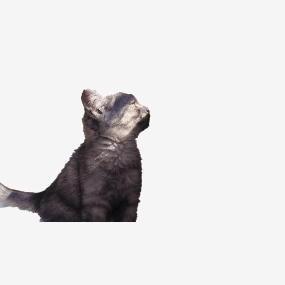 Kitty El Cantik Kucing Hitam Anak Kucing Haiwan El
