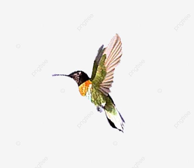 Download 80+ Foto Gambar Burung Terbang Format Png  Paling Bagus