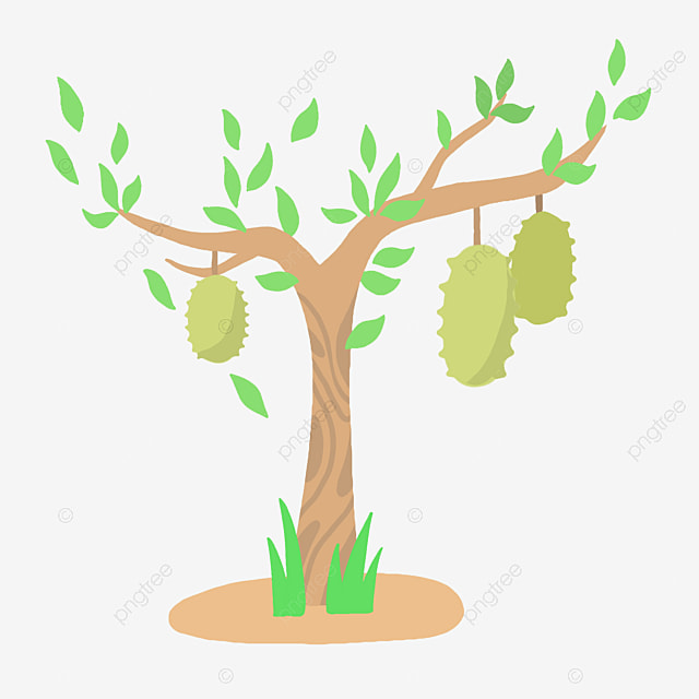 Durian Tree Png, Vector, PSD, and Clipart With Transparent