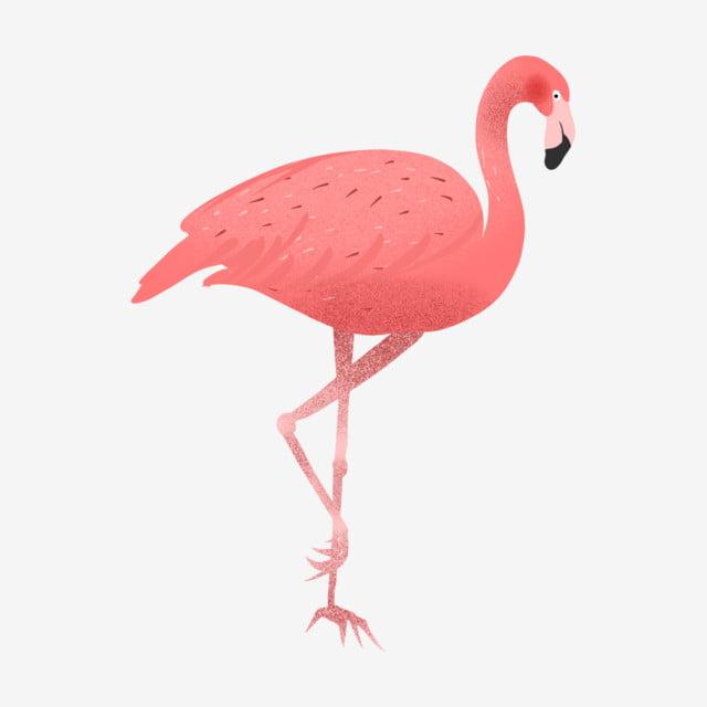 été Simple Dessin Animé Flamingo été Simple Dessin Animé