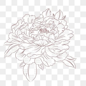 Flowers Line Drawing Png Images Vector And Psd Files Free Download On Pngtree