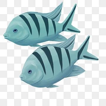 две рыбки рыбки, Рыба, океан, орнаментальный PNG и PSD