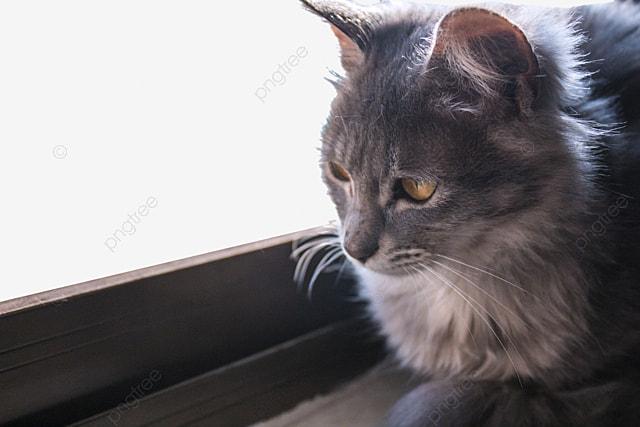 Unduh 94+  Gambar Kucing Lagi Marah Paling Baru Gratis