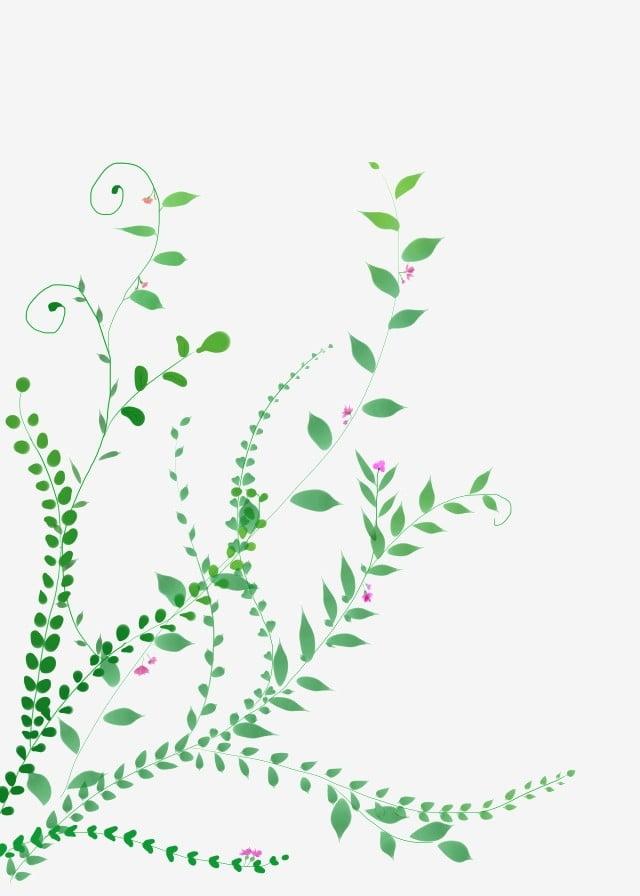 Belle Vigne Vigne De Fleur De Printemps Décoration De Plante