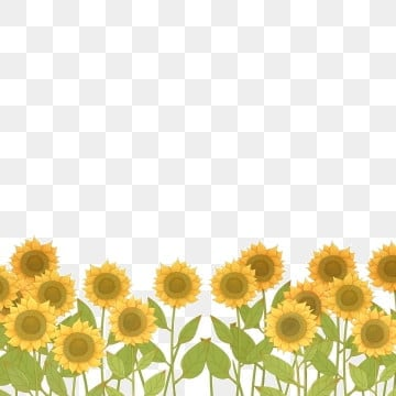 Flower Field Png Vector Psd And Clipart With Transparent Background For Free Download Pngtree