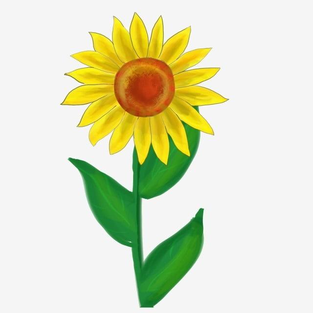 Lukisan Pokok Bunga Matahari Cikimm Com